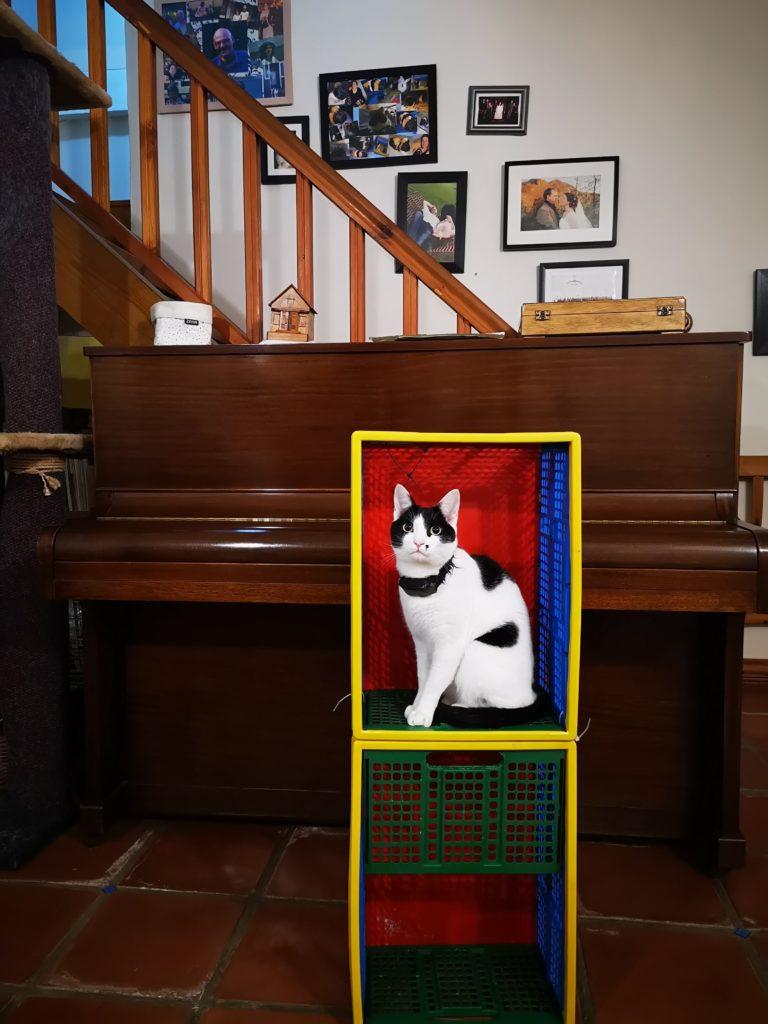 Petal Cat in a crate