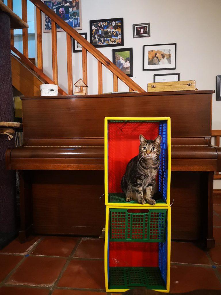Ooc cat in a crate