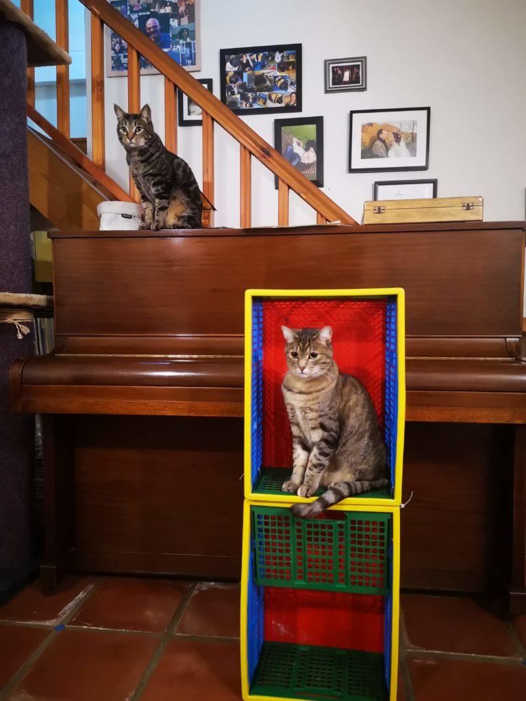 Olive cat in a crate